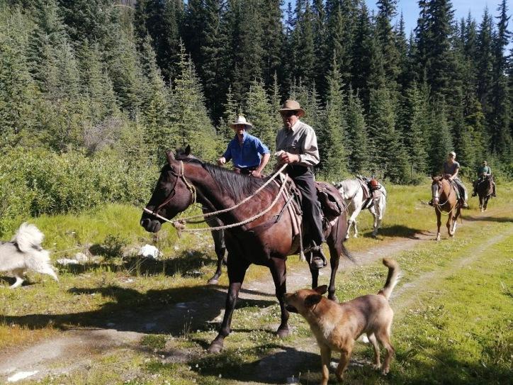2019 crew horses
